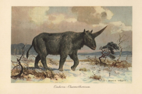 UNITED KINGDOM - SEPTEMBER 09:  Elasmotherium was an extinct genus of giant rhinoceros native to Asia during the Pliocene through Pleistocene eras. Colour printed illustration by Heinrich Harder from Tiere der Urwelt Animals of the Prehistoric World, 1916 Hamburg. Heinrich Harder (1858-1935) was a German landscape artist and book illustrator. These images come from a series of prehistoric creature cards published by the Reichardt Cocoa company in 1908. Natural historian Wilhelm Bolsche wrote the descriptive text.  (Photo by Florilegius/SSPL/Getty Images)