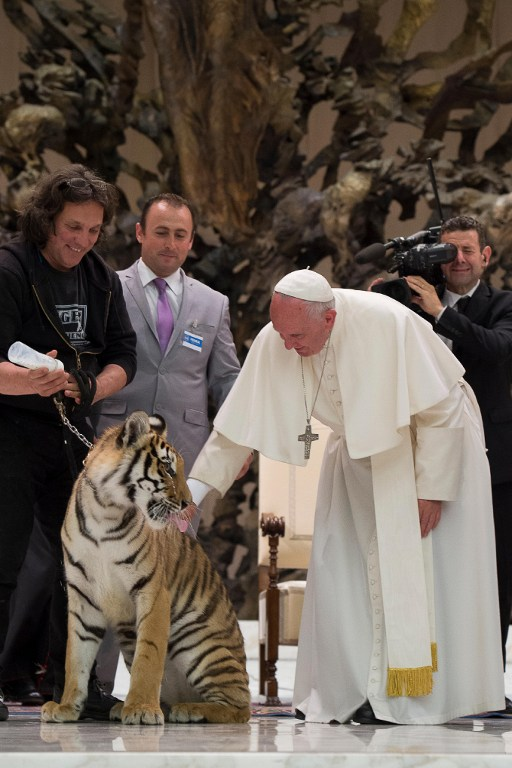 """This handout picture released by the Vatican press office shows Pope Francis caressing a young tigre during a meeting with the participants in the Jubilee of the World of Travelling Shows at Paul VI audience hall on June 16, 2016 in Vatican. / AFP PHOTO / OSSERVATORE ROMANO / HO / RESTRICTED TO EDITORIAL USE - MANDATORY CREDIT """"AFP PHOTO / OSSERVATORE ROMANO"""" - NO MARKETING NO ADVERTISING CAMPAIGNS - DISTRIBUTED AS A SERVICE TO CLIENTS"""