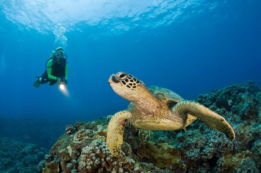Reserva marina en Hawái