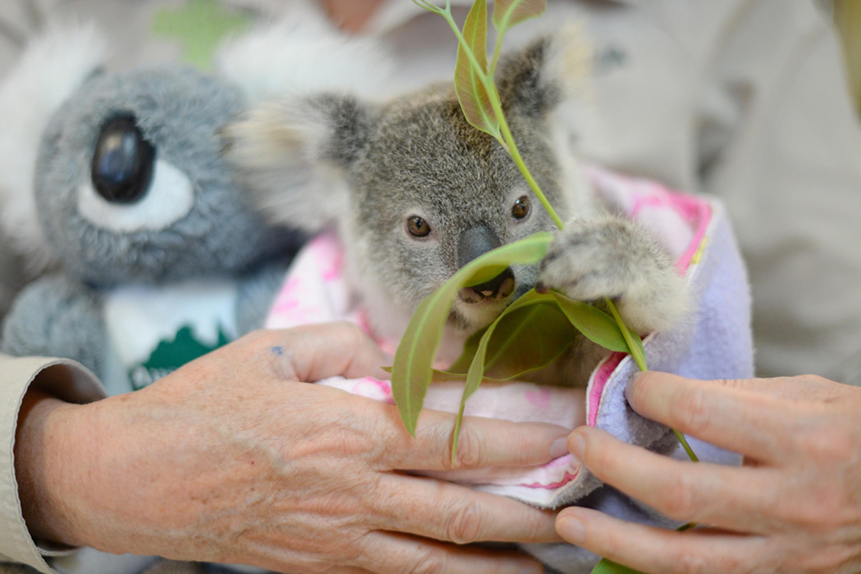 AFP / AUSTRALIA ZOO / BEN BEADEN