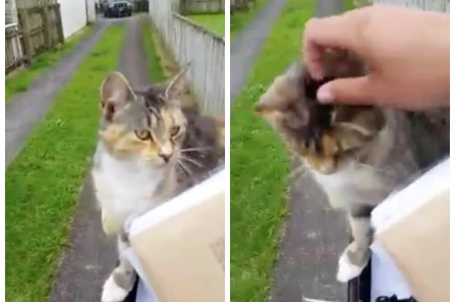 Cartero consiente a un gato. Pulzo