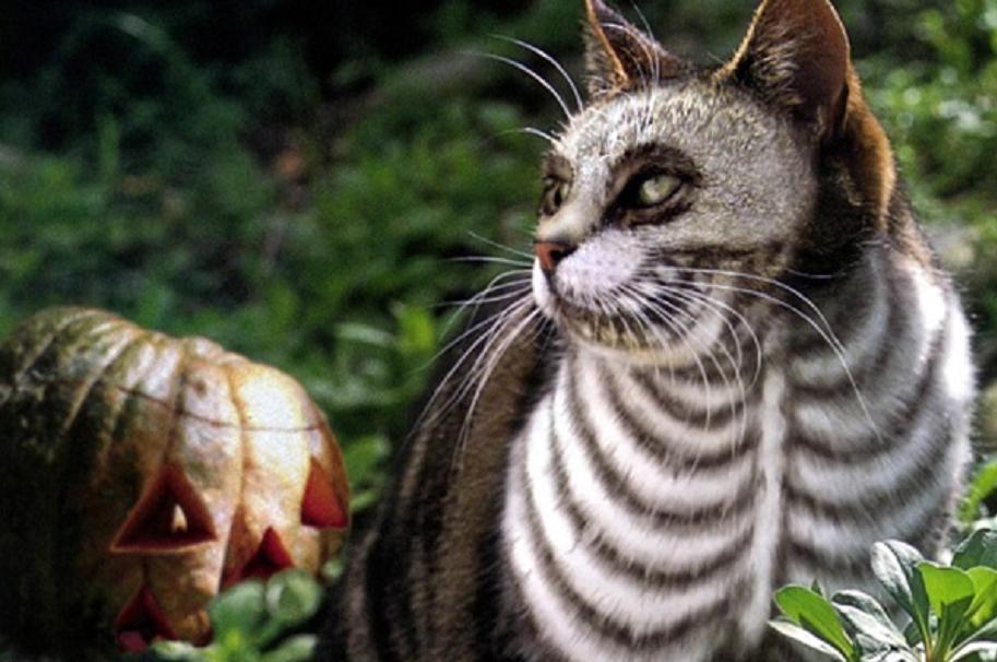 gato disfrazado