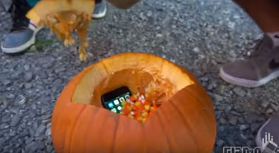 iPhone 7 dentro de calabaza. Pulzo.com