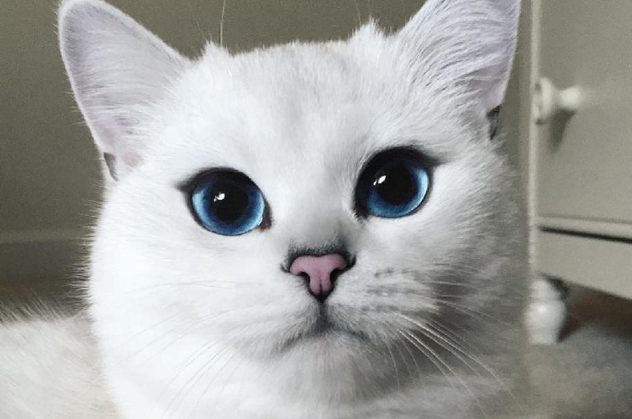 Coby, el gato más fotogénico de Instagram