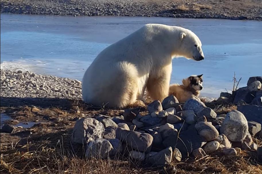 Oso polar y perro