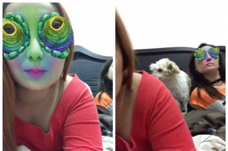 Perro atacó a su dueña, al parecer, luego de verla con un filtro de Snapchat. Pulzo.com