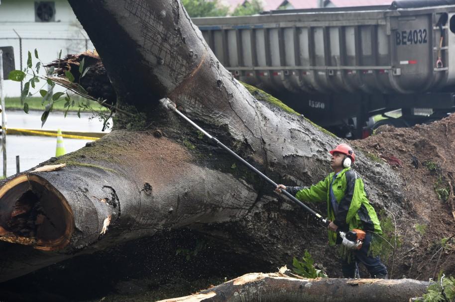 El huracán Orro tumbó varios árboles en su paso por Panamá