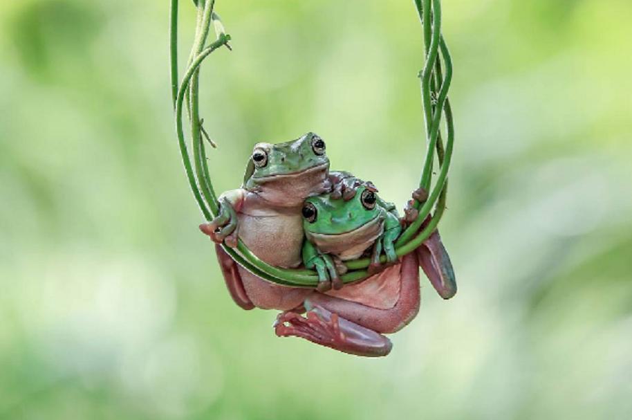 Espectaculares fotografías de ranas