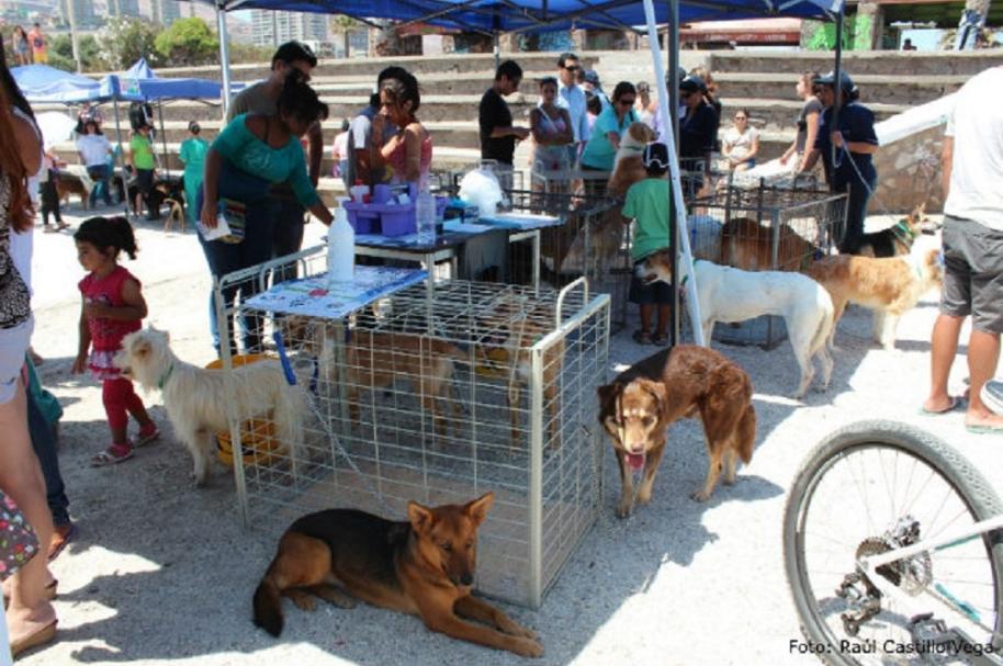 Jornada de adopción de perros y gatos