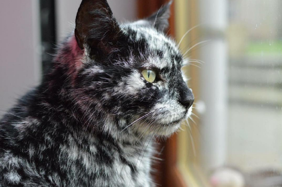 Gato con pelaje extraño
