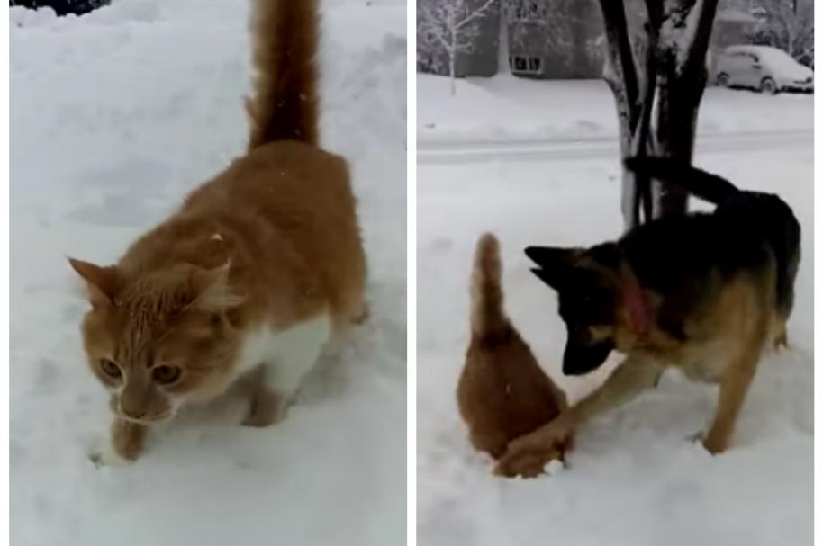 Perro empuja a gato contra la nieve. Pulzo.com