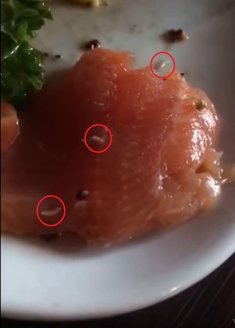 Gusanos en salmón de Oma