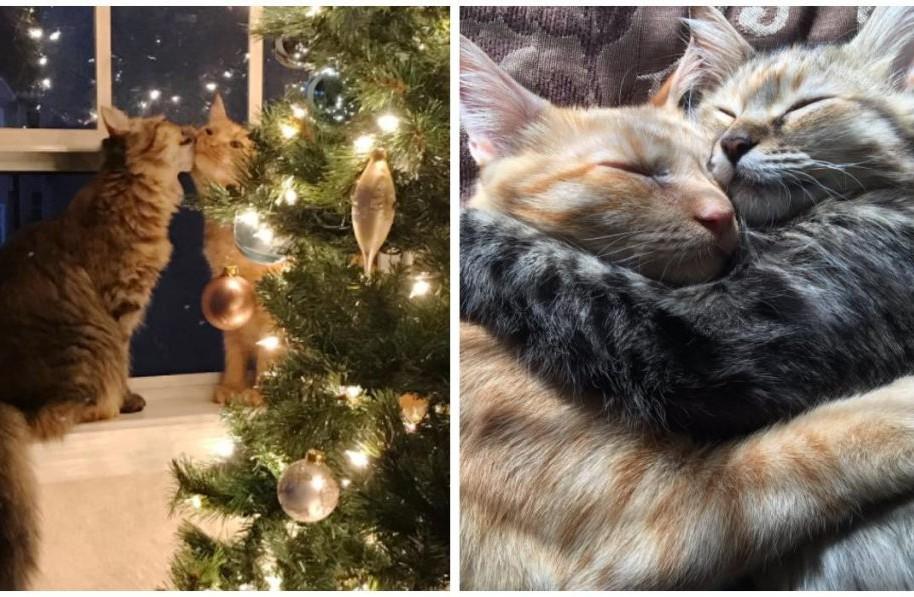 Gatos enamorados