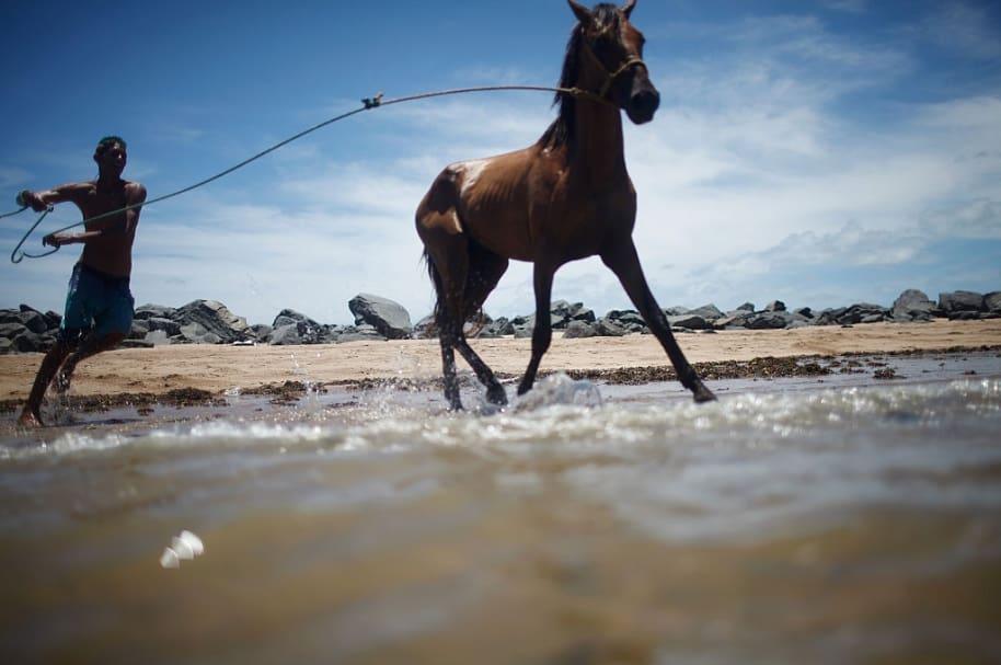 Caballo y domador en la playa. Pulzo.com