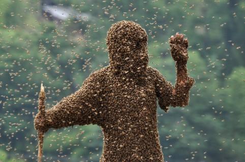 Enjambre de abejas cubre a una person (imagen de referencia)