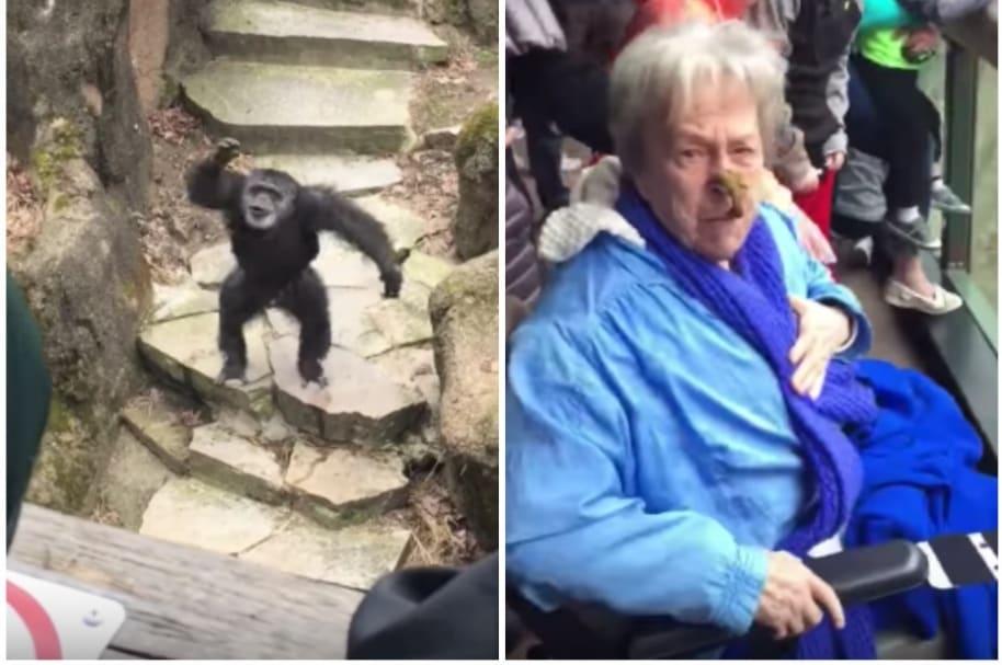 Mono le lanza popó a anciana.
