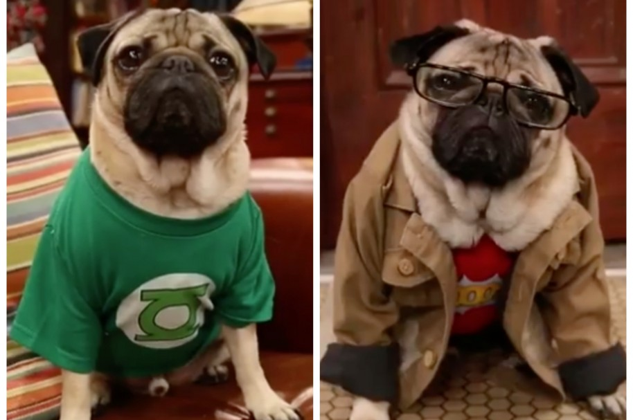 Doug The Pug en parodia de 'The Big Bang Theory'. Pulzo.com