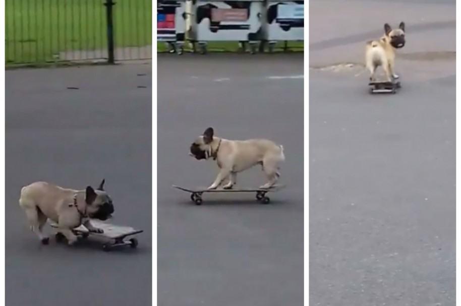 Perro que practica skate. Pulzo.com