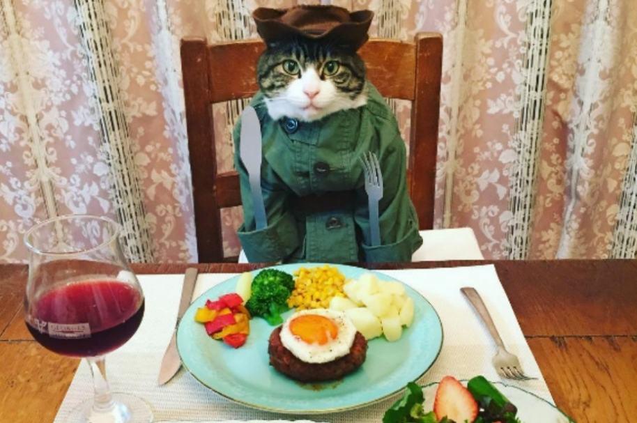 Gato disfrazado.