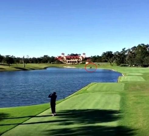 Golfista mata a pato con un tiro. Pulzo.com