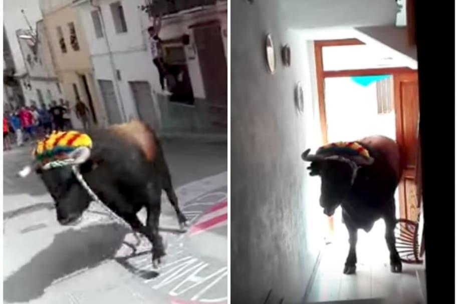 Toro entra a una casa.