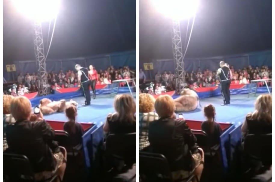 Oso pardo que se lanzó a público de un circo. Pulzo.com