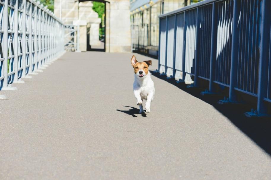 Perro cruza puente.
