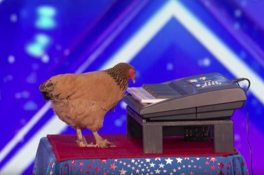Gallina en 'America's Got Talent'.