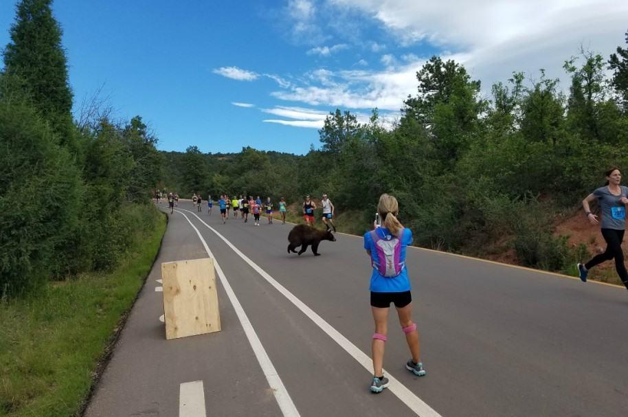 Oso en carrera en Colorado. Pulzo.com