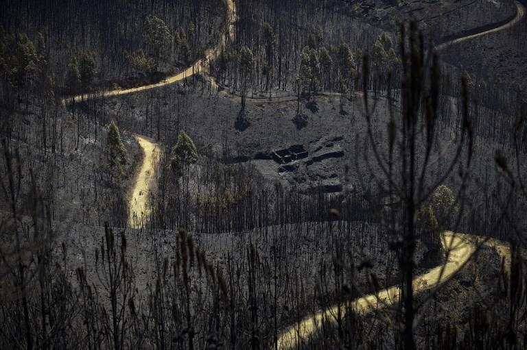Incendio forestal en Portugal. Pulzo.com