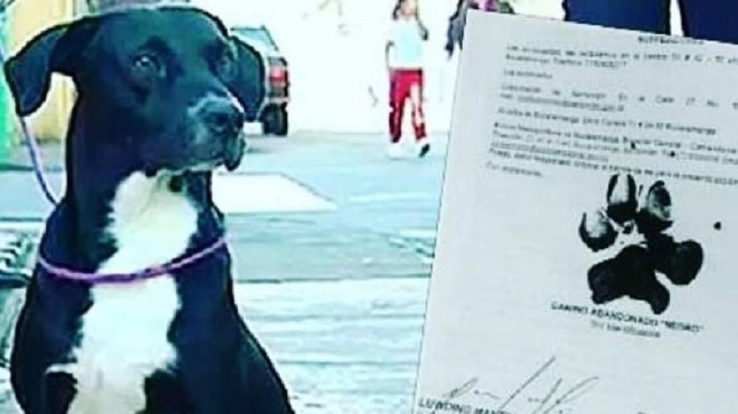 'Negro', el perro que firmó la tutela con la huella de su pata