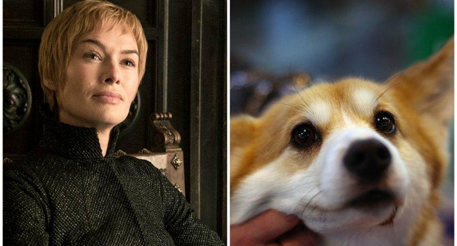 Cersei Lannister y perro corgi. Pulzo.