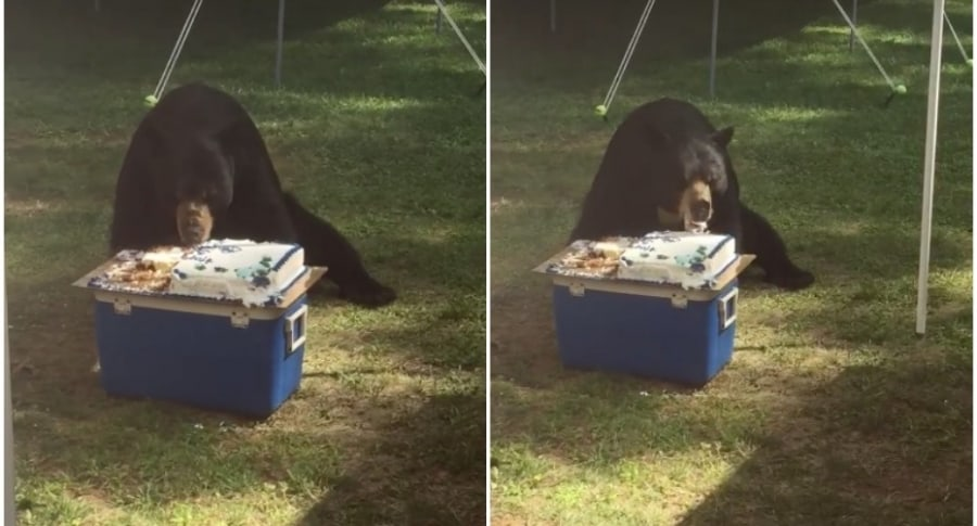 Oso come pastel.