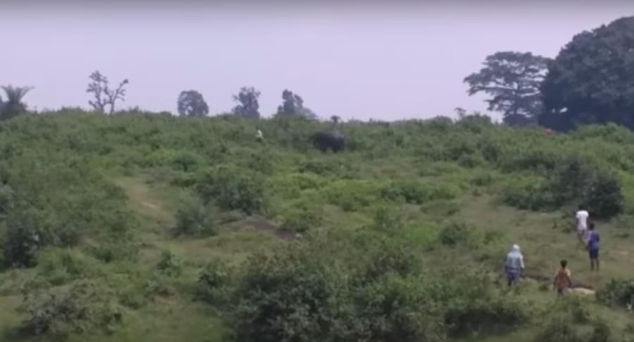 Elefante a punto de atacar a un hombre. Pulzo.