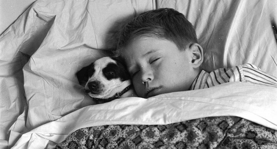 Por qué es bueno dormir con mascotas