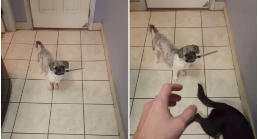 Perro con un cuchillo en su hocico.