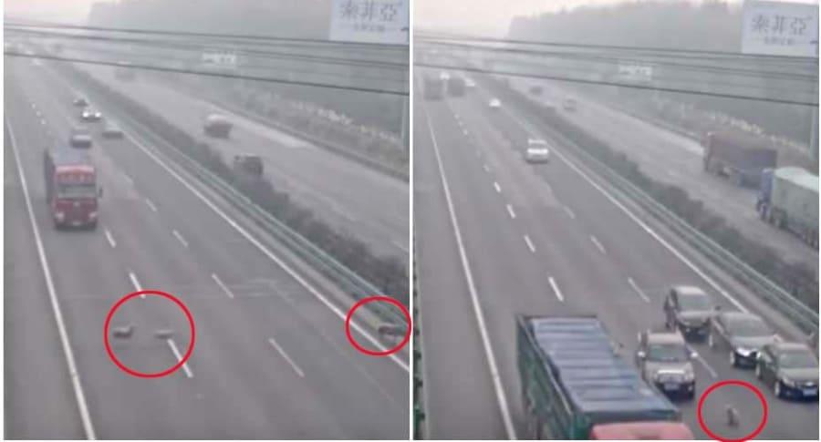 Ovejas cruzan vía en China.