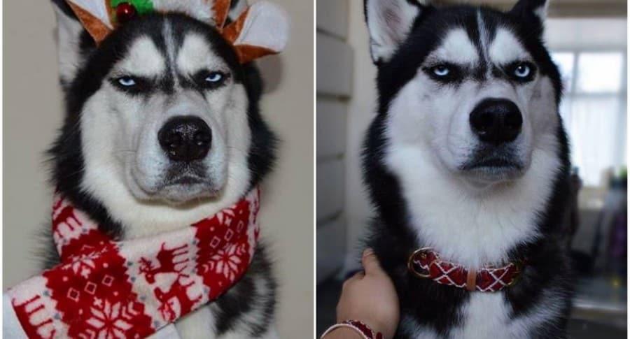 Perro con expresión de enfado.