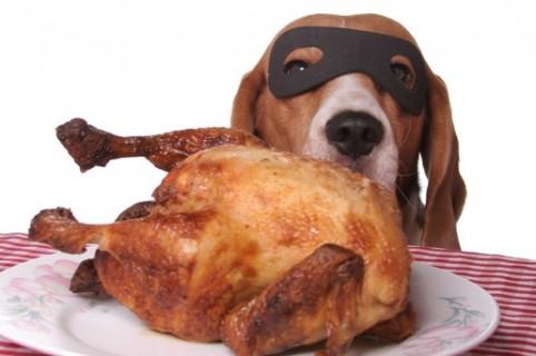 Perro ladrón de pollo