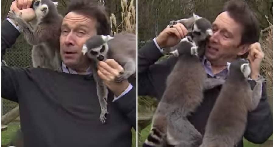 Lémures muerden a reportero de la BBC.
