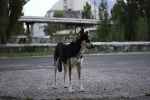 Perro callejero. Pulzo.