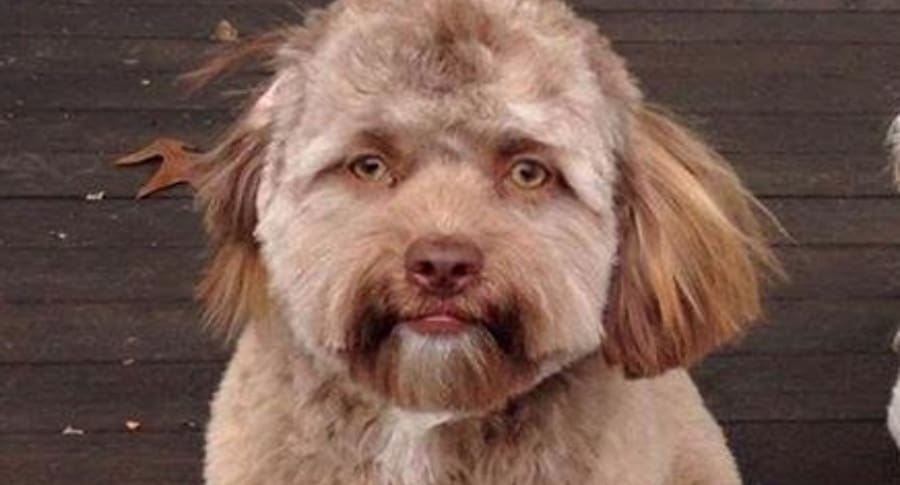 Perro que supuestamente tiene rostro humano.